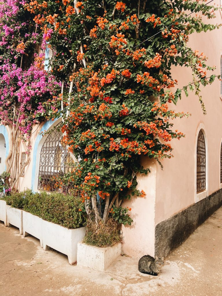 Morocco, Marrakesh, Agadir, Марракеш, Марокко, Агадир