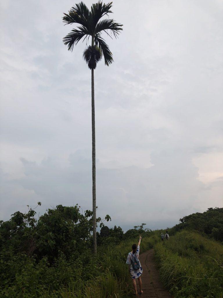 bali, ubud, indonesia